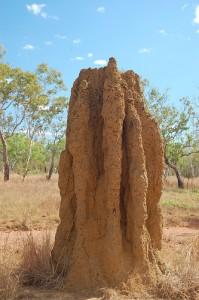 5.TermiteMound